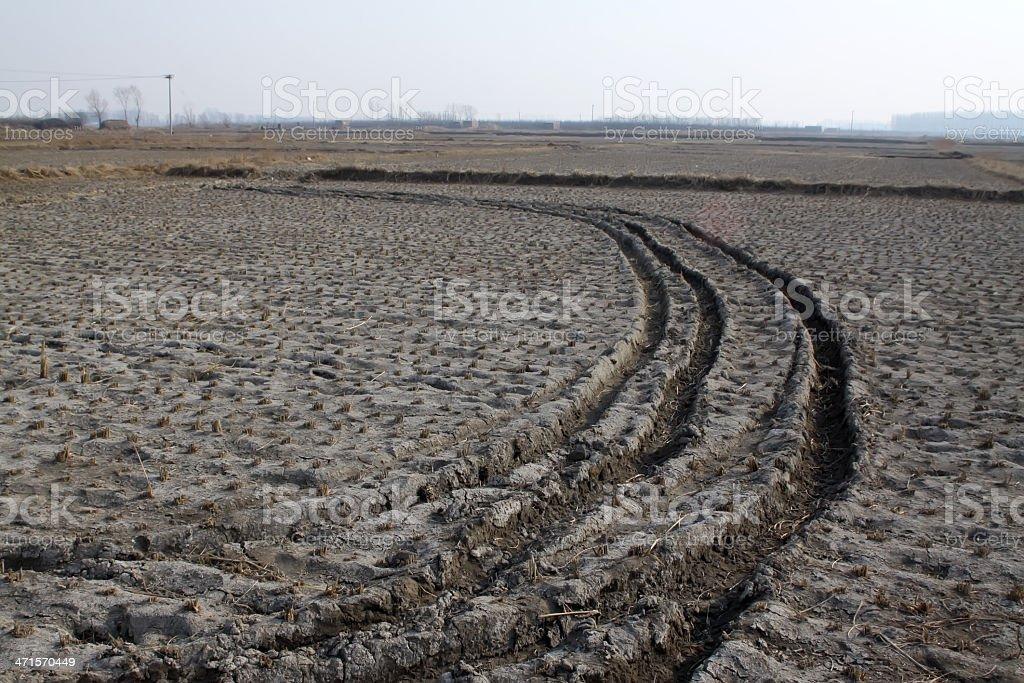 paddy fields in winter stock photo