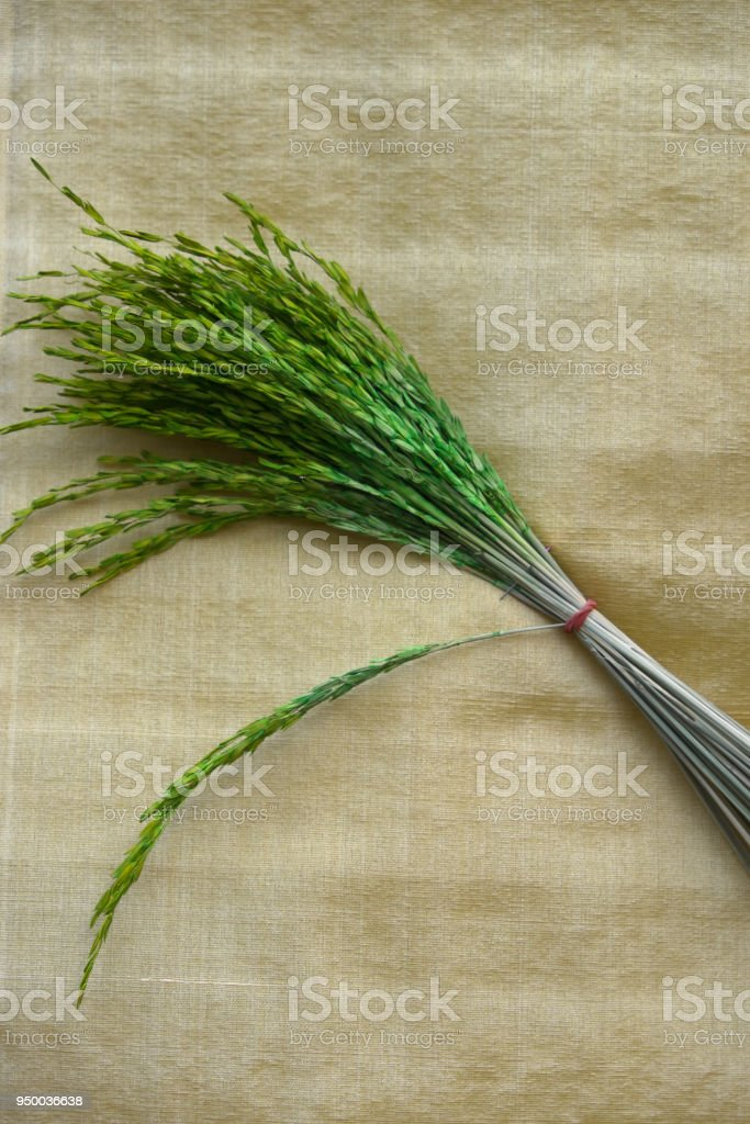 paddy on gold background stock photo