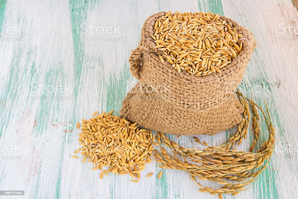 paddy rice seed in a Burlap sack. stock photo