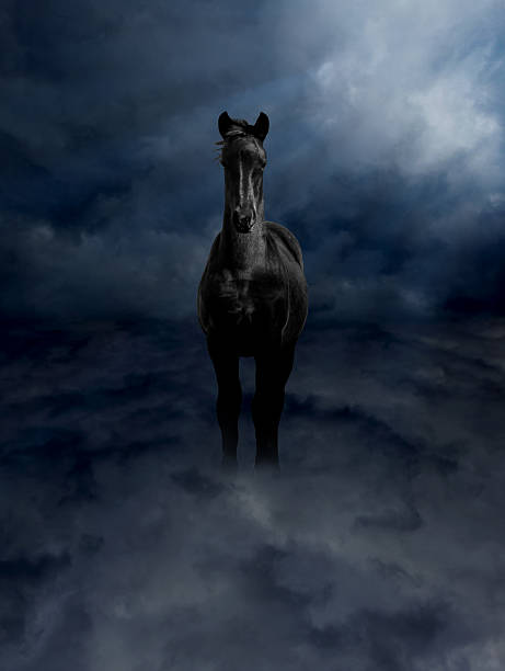 pagasus black steed in storm clouds - pegasus stock photos and pictures