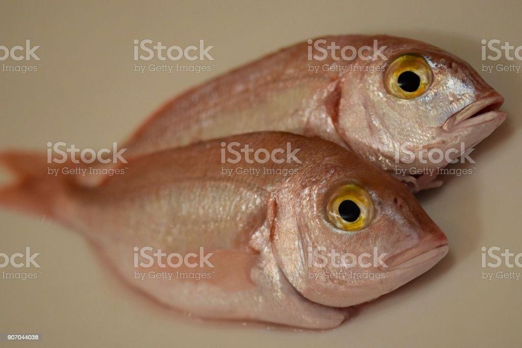 Pagellus erythrinus stock photo