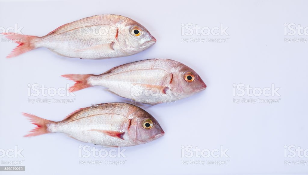 Pagellus fishes stock photo