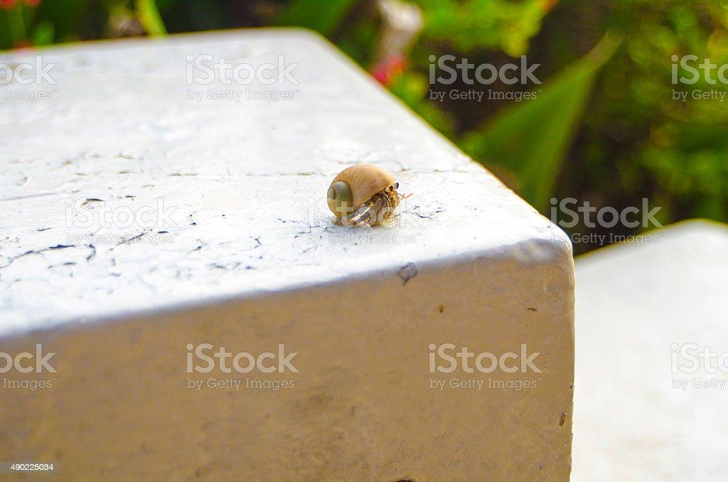 Paguroidea in Zanzibar Stone Town stock photo
