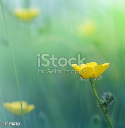 Yellow flower close up, Spring and summer concept