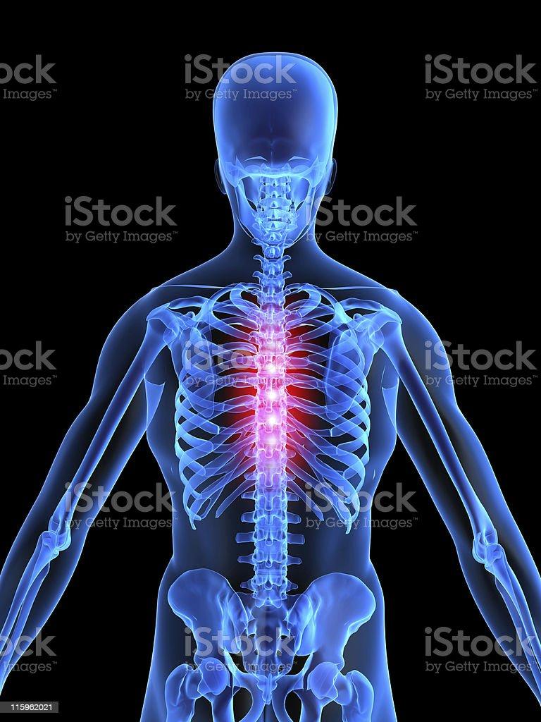 Rücken Schmerzen Mitte Stock-Fotografie und mehr Bilder von Anatomie ...