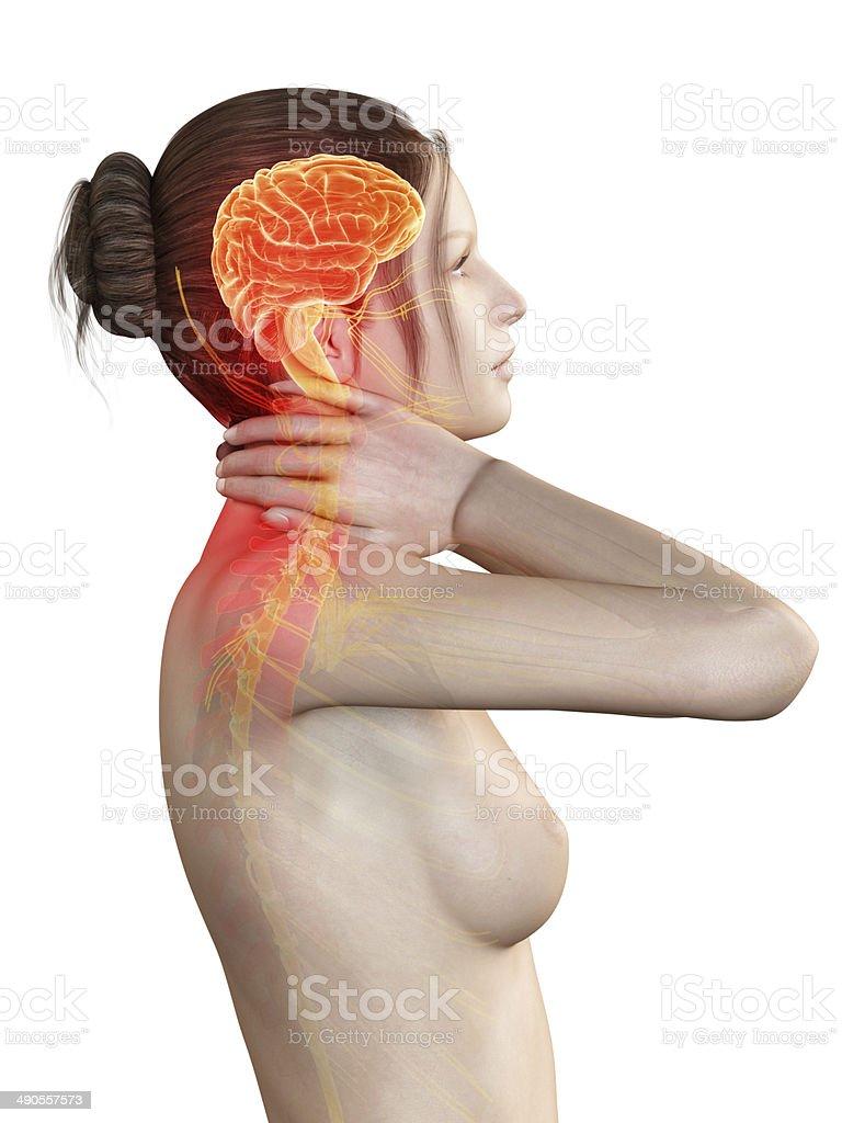 Dolor De Cuello - Fotografía de stock y más imágenes de Anatomía ...