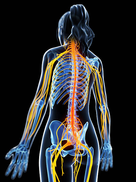 painful nerves stock photo