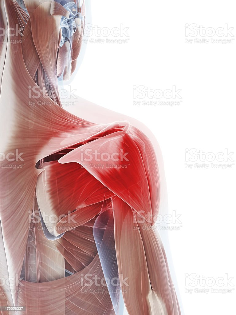 painful shoulder muscle stock photo