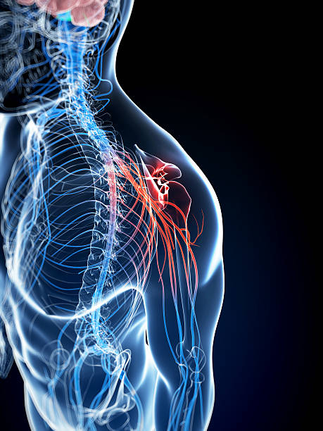 painful shoulder 3d rendered illustration of a painful shoulder intercostal space stock pictures, royalty-free photos & images