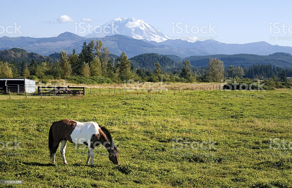 Paint Horse and Mount Rainier stock photo
