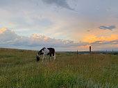 istock Paint horse grazing pasture storm color sky 1166382506