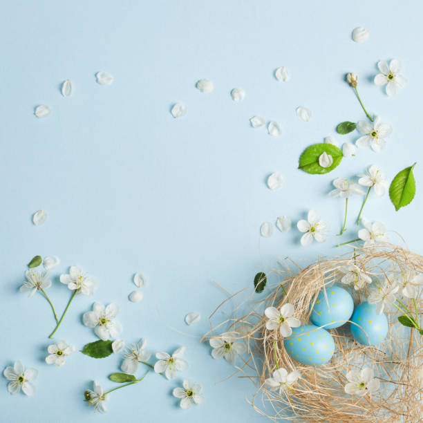 painted blue easter eggs in the nest on the background of cherry blossoms - cherry blossoms imagens e fotografias de stock