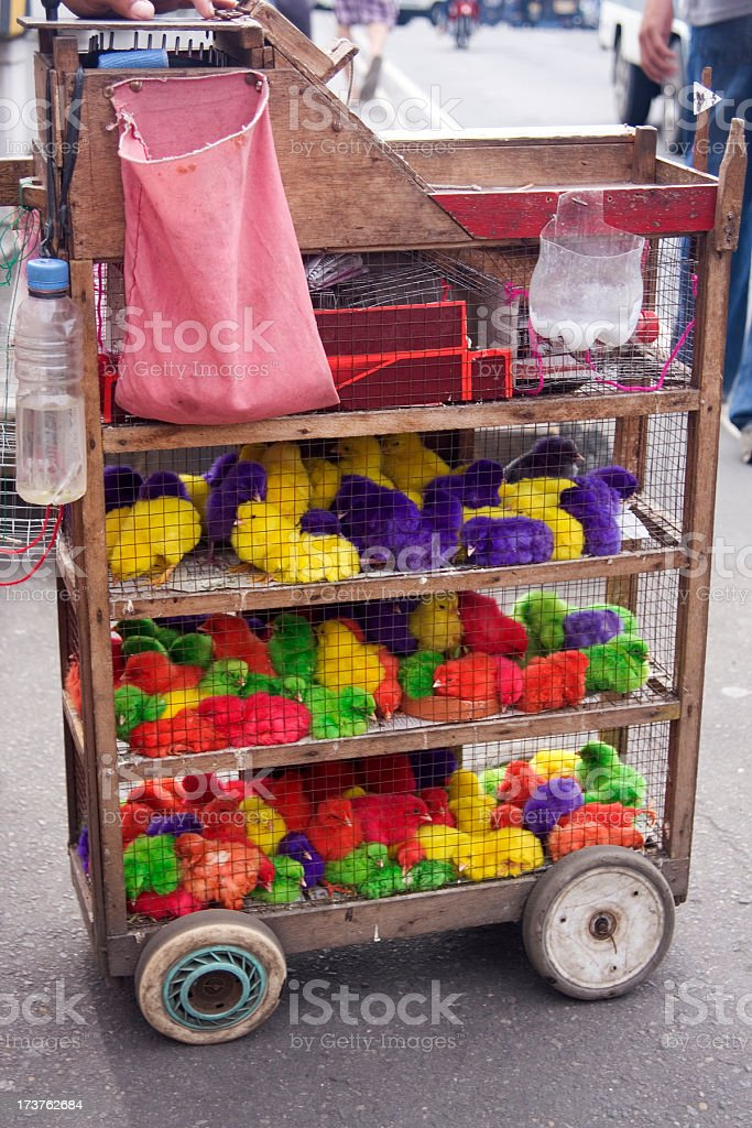 Painted chicks for sale royalty-free stock photo