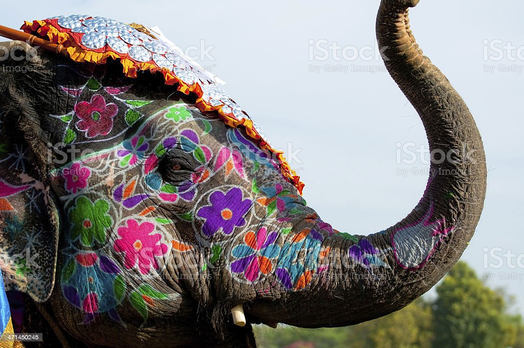 Painted elephant festival in Jaipur royalty-free stock photo