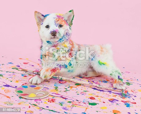 istock Painted Pooch 514654279