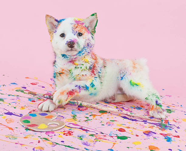 Painted Pooch stock photo
