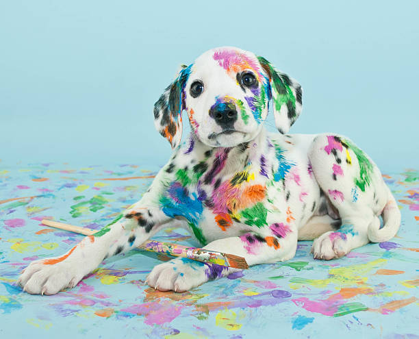 Painted Puppy stock photo