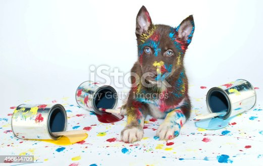 istock Painted Puppy 496644709