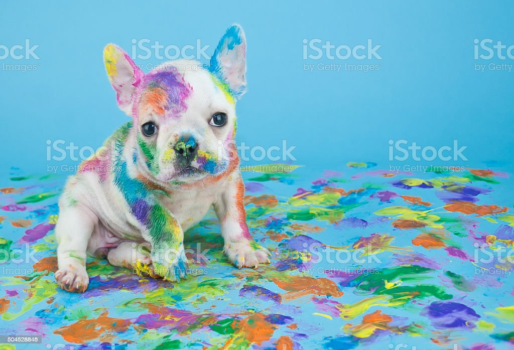 Painted Puppy royalty-free stock photo