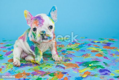 istock Painted Puppy 504528846