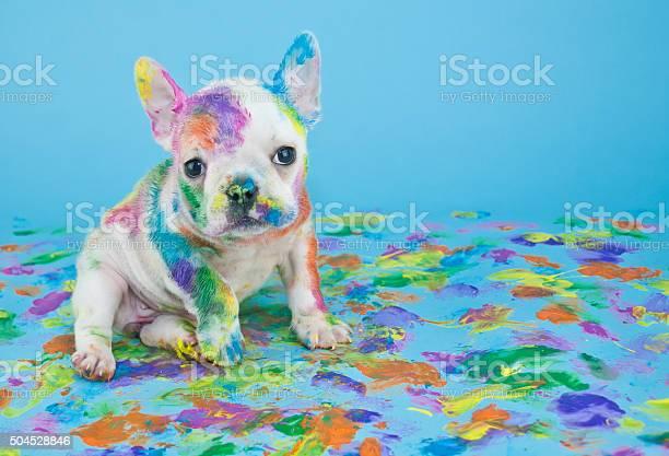 Painted puppy picture id504528846?b=1&k=6&m=504528846&s=612x612&h=h aadww04newxivkmx5ji9z2aadgxda yeverexzebu=