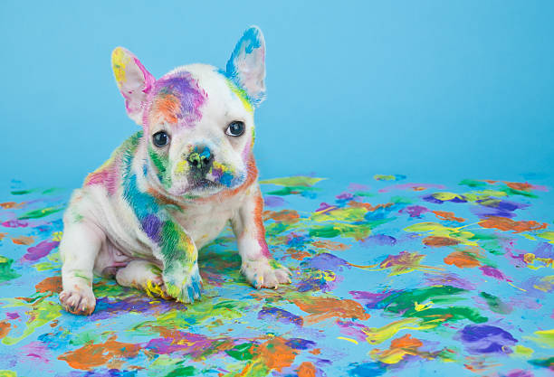 Painted puppy picture id504528846?b=1&k=6&m=504528846&s=612x612&w=0&h=fbztpcbzhl8rin trk hkunakwt p1ss43onweplne8=