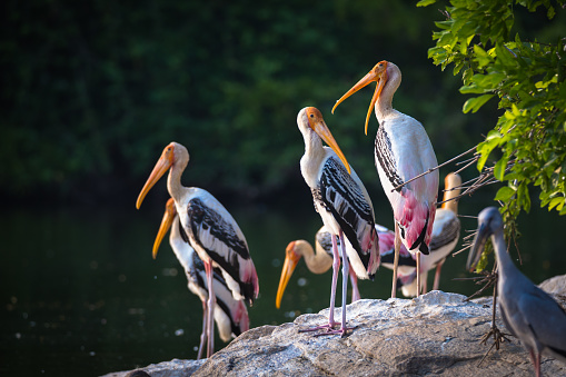 These are beautifull birds called