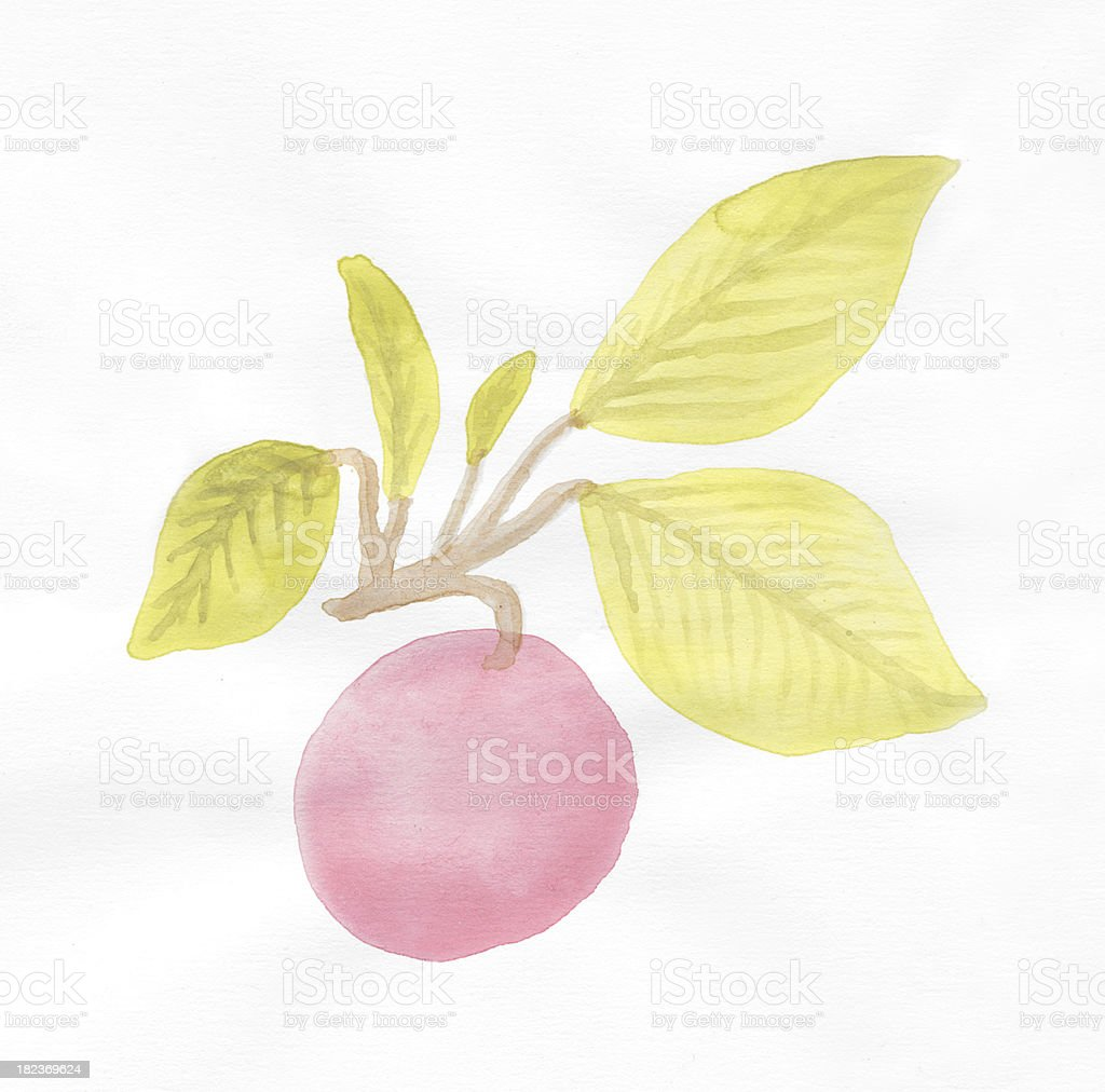 Painted watercolor apple and leaves royalty-free stock photo