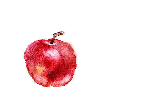 Painted watercolor red apple on white background stock photo
