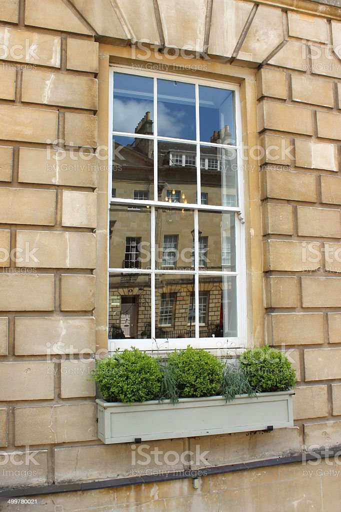 Painted wooden window box with evergreen buxus and lavender plants stock photo