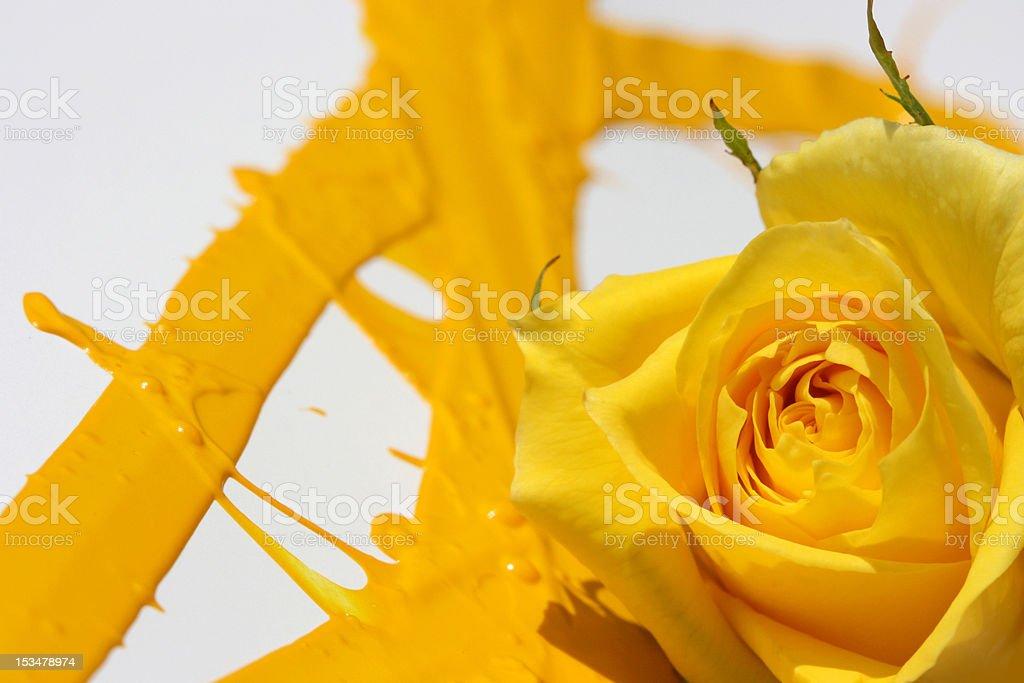 Painted Yellow Rose stock photo