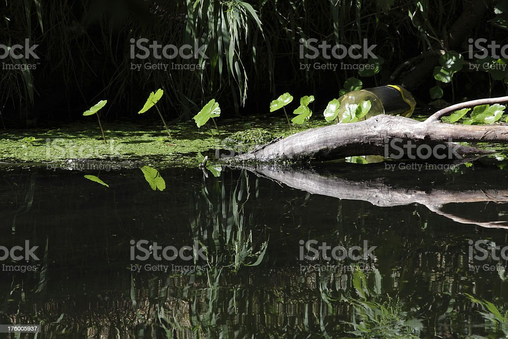 Liquid impression riverside green leaves reflected in dark water stock photo