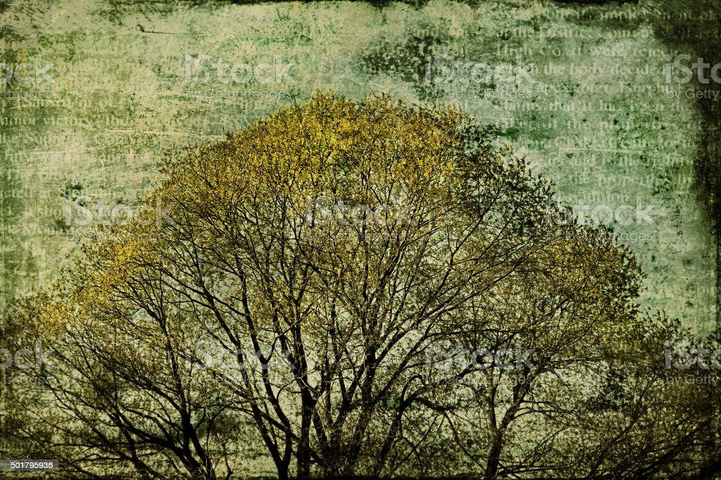 painting autumn tree stock photo