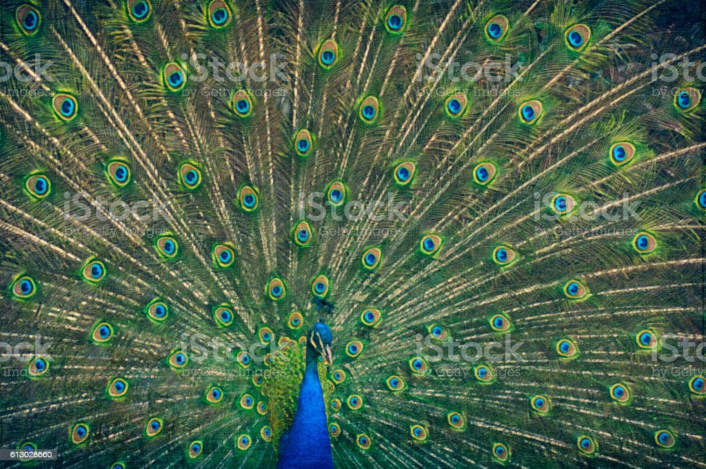 Painting of a peacock stock photo