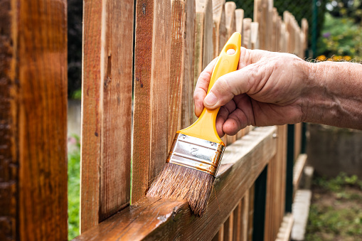 Painting wooden fence at backyard. Paintbrush in male hand. Renovation of wood picket fence.