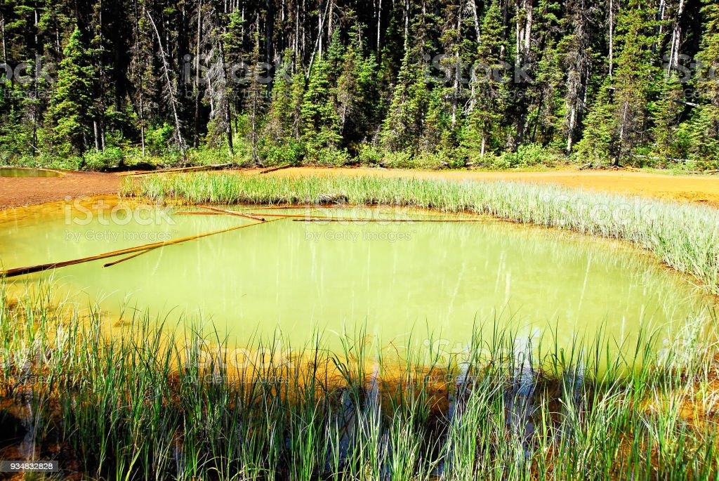 페인트 냄비 Kootenay 국립 공원, bc 주, 캐나다에서 - 로열티 프리 0명 스톡 사진
