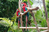 A yellow parrot sits with red beak on a branch in the park and eats an apple. The parrot is looking at the camera.