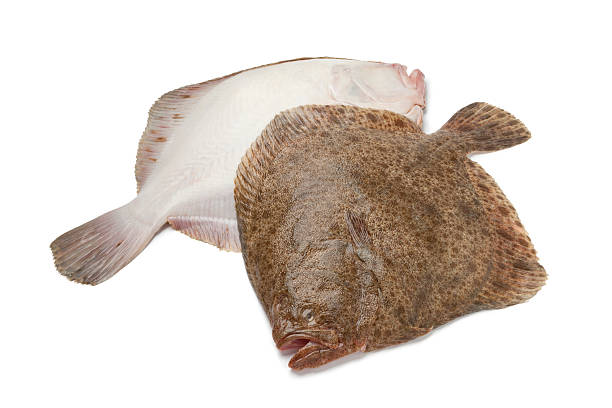 par de recién rodaballo fishes - rodaballo fotografías e imágenes de stock