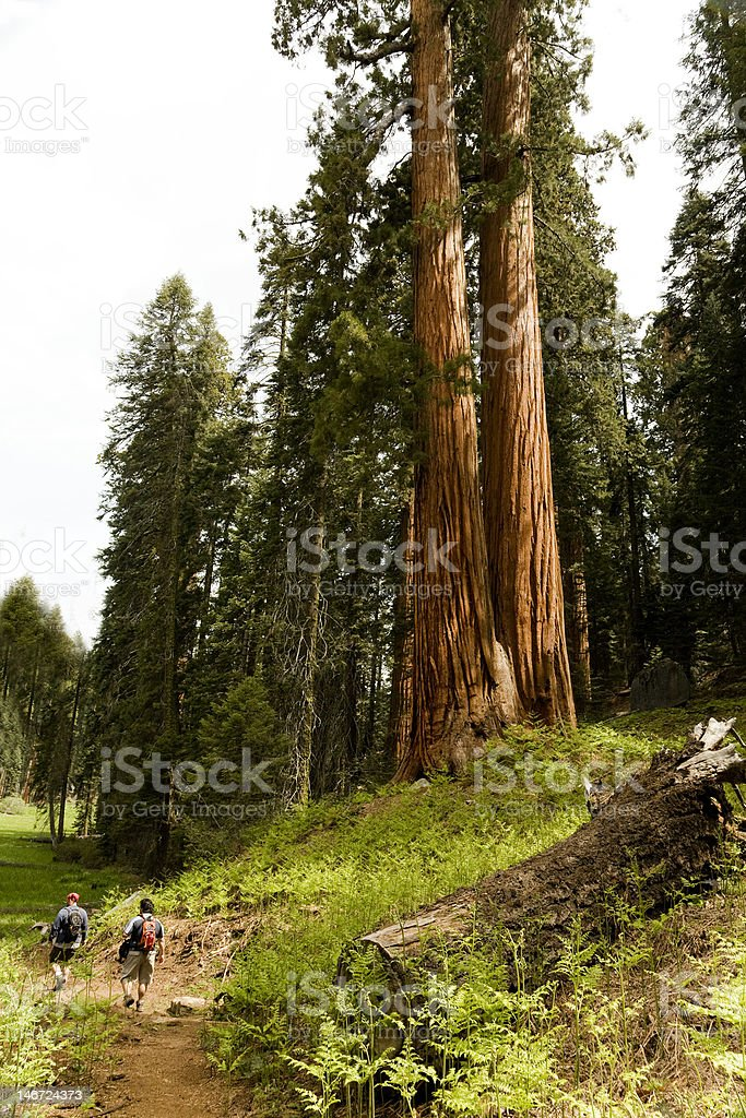 Pair of Hikers in Sequoia National Park royalty-free stock photo