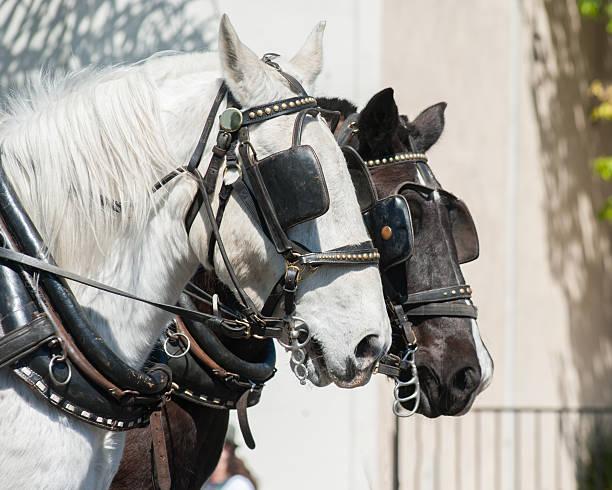 paar mit pferdekopf - scheuklappe stock-fotos und bilder