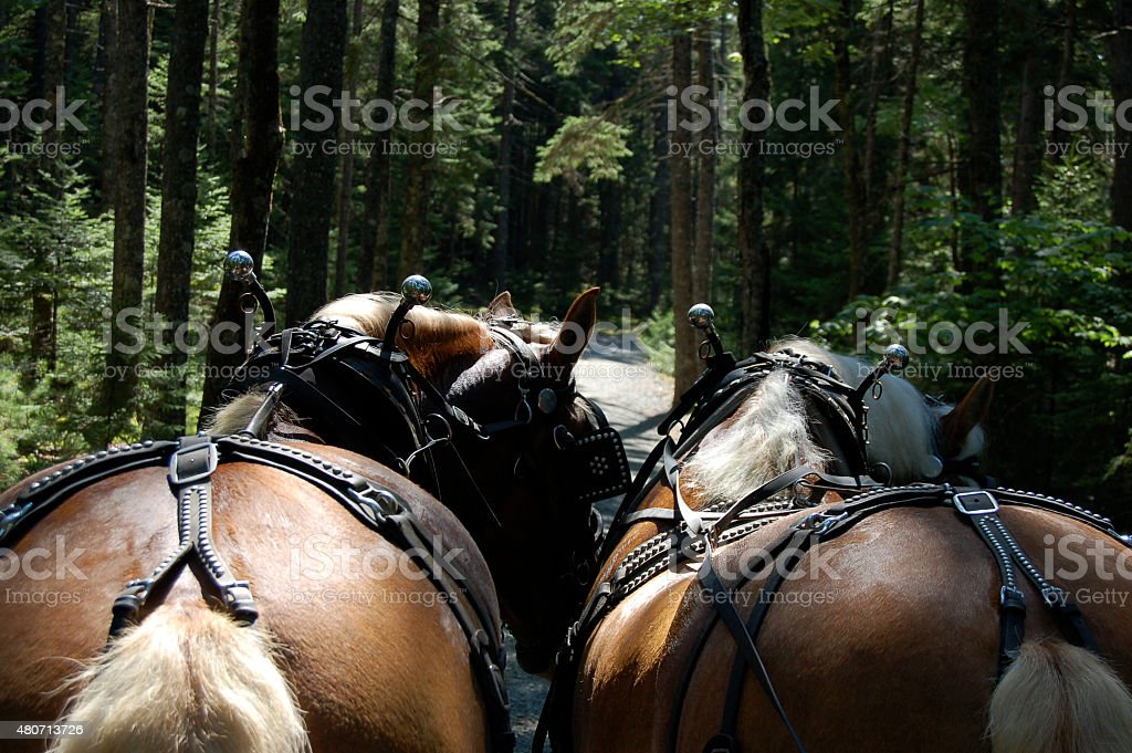 Pair of horses stock photo