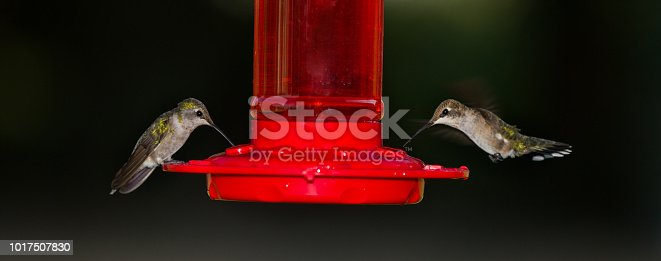 Two birds drink nectar from a feeder.