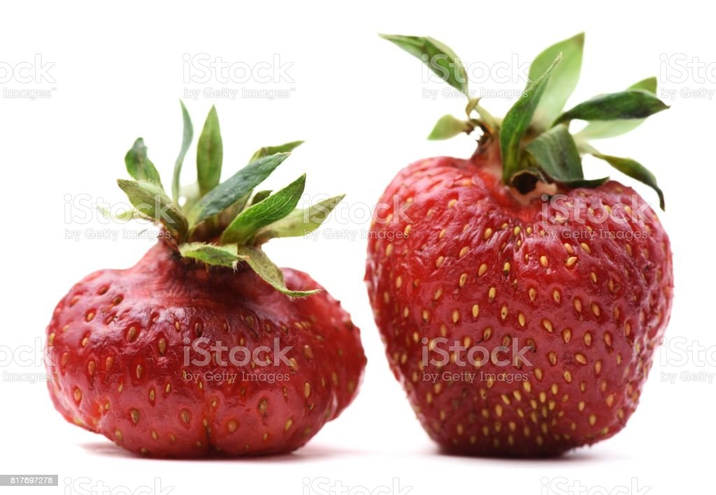 Pair of imperfect organic heirloom strawberries isolated stock photo