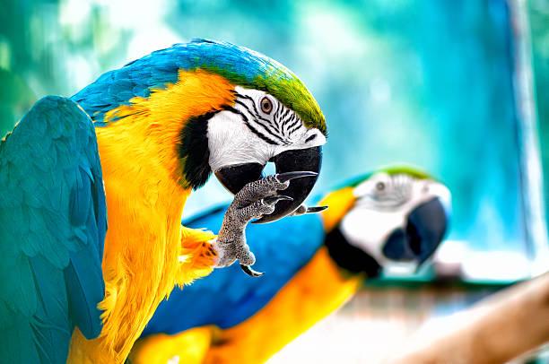 paar ara papageien in der wilden tropischen dschungel - urbanara stock-fotos und bilder