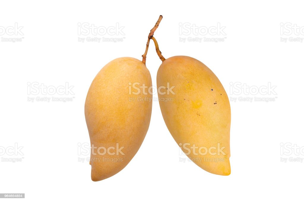 Pair of Mango isolated with clipping path. royalty-free stock photo