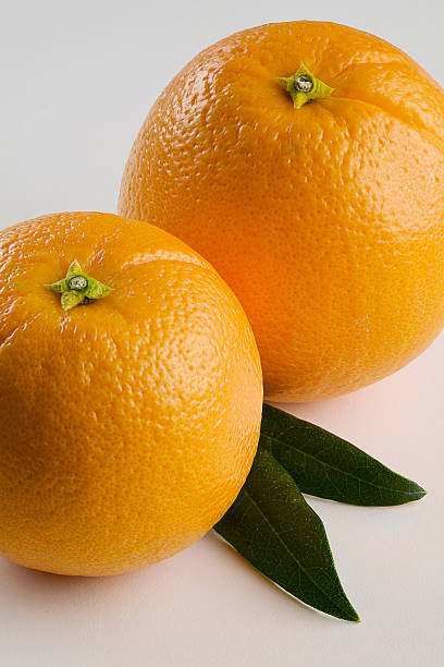 Pair of Oranges Close Up stock photo