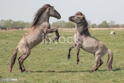 The ponies are located in a wildlife conservation area with a large number of mares, out of view in the image.