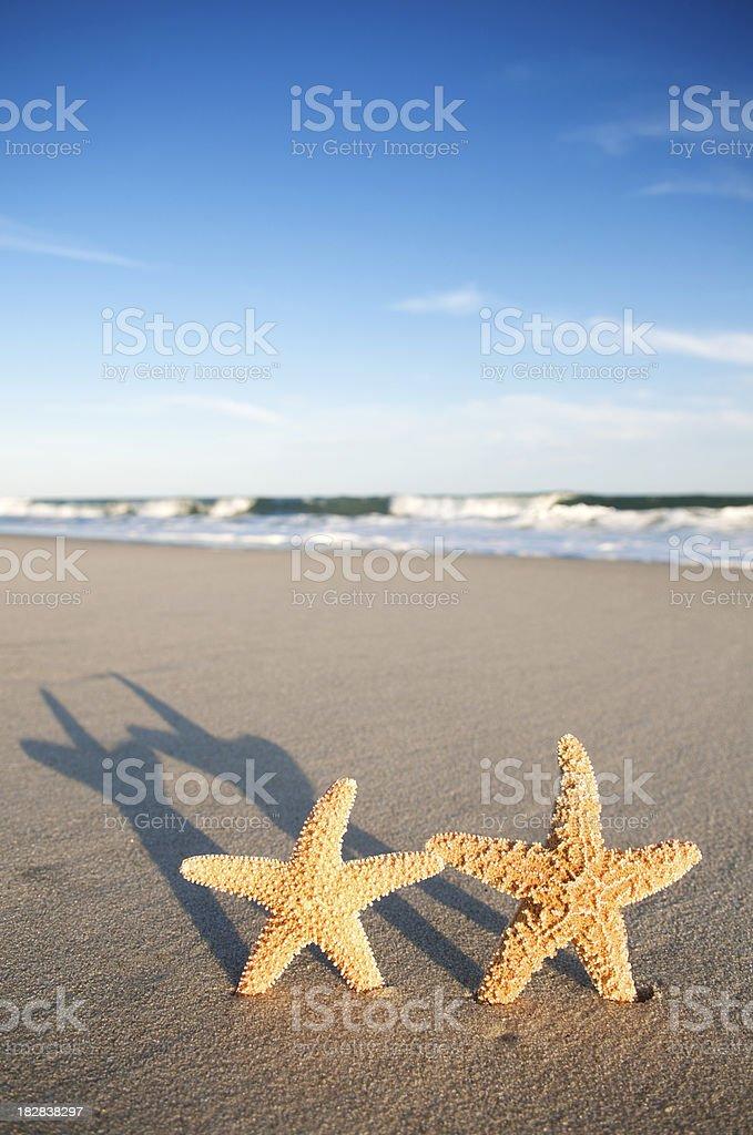 Pair of Starfish Cast Long Shadows on Sunset Beach royalty-free stock photo