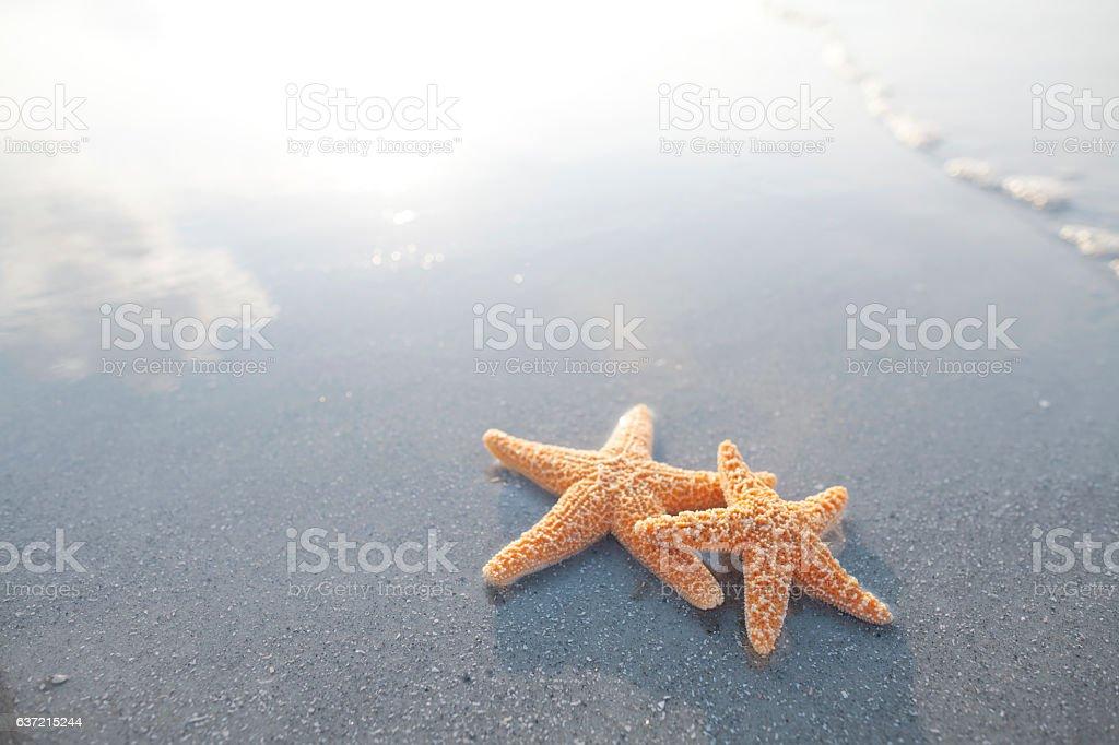 Pair of starfish on the beach stock photo