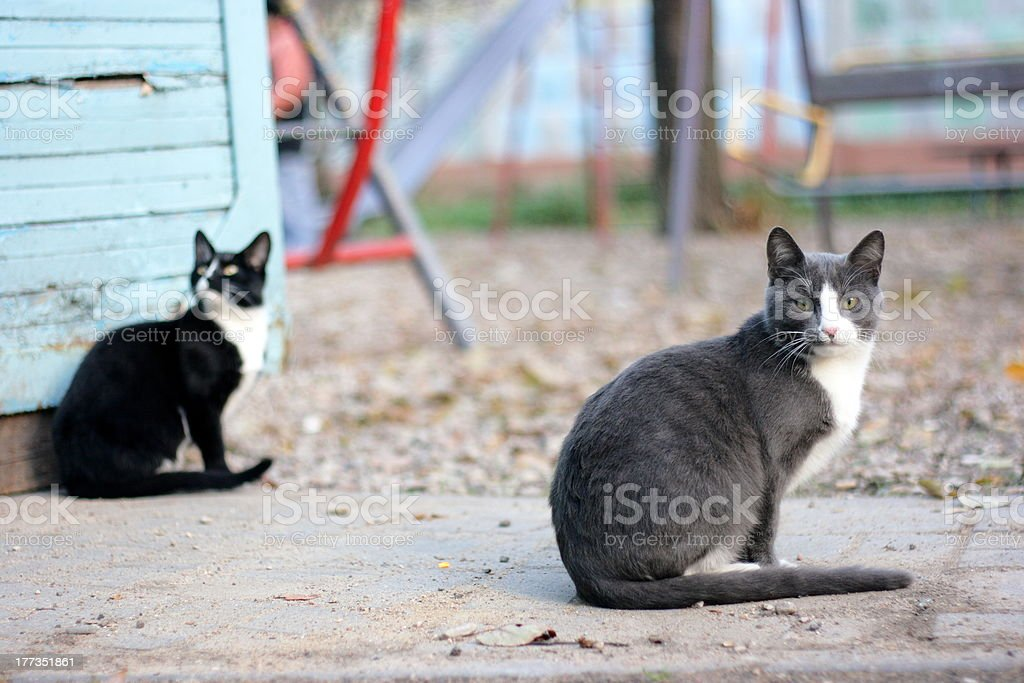 Pair of street cats stock photo